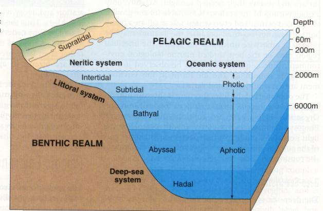 Ocean Zones Diagram Detail Product Wiring Diagrams